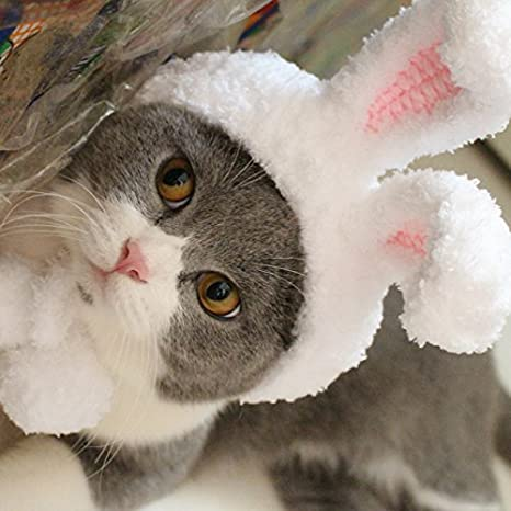 Yonfan - Gorro para Mascota, Gato, Perro, Gorro de Buey, Accesorios para Gatos pequeños, Perros, Cachorros con Agujeros para los oídos: Amazon.es: Productos ...