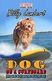 Dog On A Surfboard
