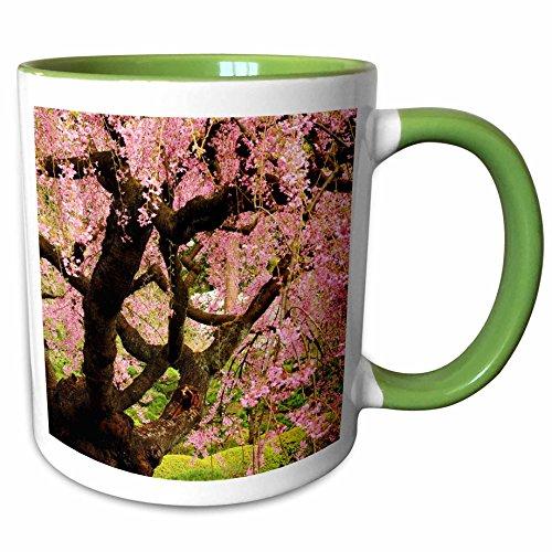 - 3dRose Danita Delimont - Japanese Gardens - Cherry Tree, Japanese Garden, Portland, Oregon, USA - US38 MHE0055 - Michel Hersen - 15oz Two-Tone Green Mug (mug_145947_12)
