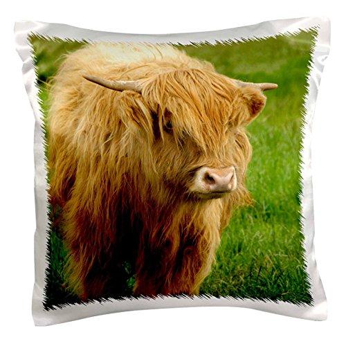 3dRose pc_82799_1 Scotland, Highland Cow, Farm animal-EU36 CMI0128-Cindy Miller Hopkins-Pillow Case, 16 by 16