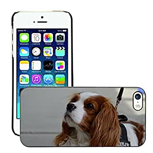 Just Phone Cases Slim Protector Hard Shell Cover Case // M00127744 Dog Hybrid Funny Pet Animal Fur // Apple iPhone 5 5S 5G