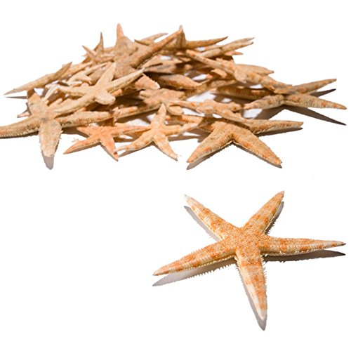 Fun Express Real Starfish Decorations