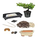 Eve's Deluxe Bonsai Tree Starter Kit, Complete Do-It-Yourself Kit with 6 Year Old Small Japanese Juniper