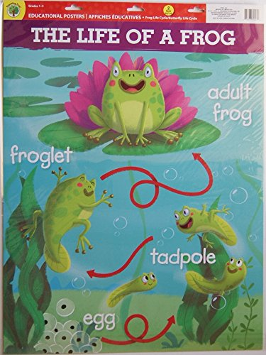 Teaching Tree Large Educational Wall Posters - A Butterflys Life and The Life of a Frog - Set of 2 - 17 x (Life Cycle Of A Frog For Kids)