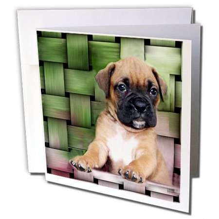 3dRose Brindle Boxer Puppy - Greeting Cards, 6 x 6 inches, set of 12 (gc_4142_2) ()