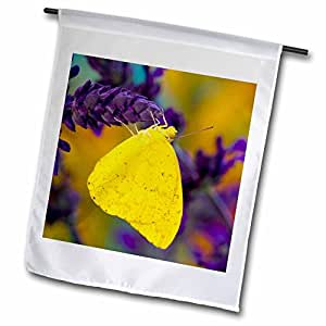 Danita Delimont - Butterflies - Tropical Butterfly, Apricot Sulphur - US48 DGU0468 - Darrell Gulin - 18 x 27 inch Garden Flag (fl_95481_2)
