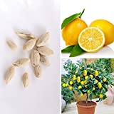 BigFamily 10pcs Rare Lemon Tree Seeds Indoor Outdoor Garden Heirloom Fruit Plant