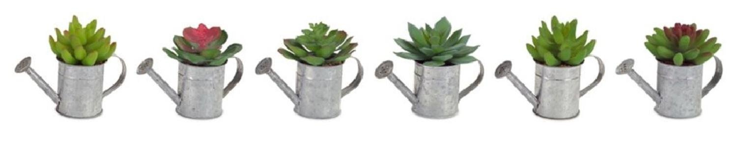 """Club Pack of 12 Splendid Succulents in Old Fashioned Looking Watering Cans 5"""""""