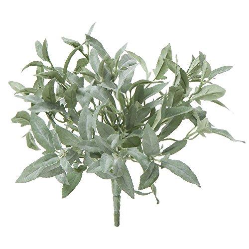 Bush Sage - 3