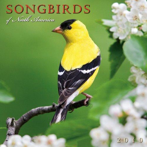 Songbirds of North America 2010 Wall Calendar (Calendar)