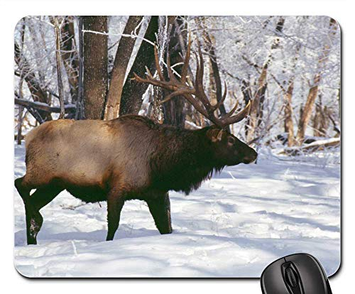 Mouse Pads - Elk Hooved Animals Rut