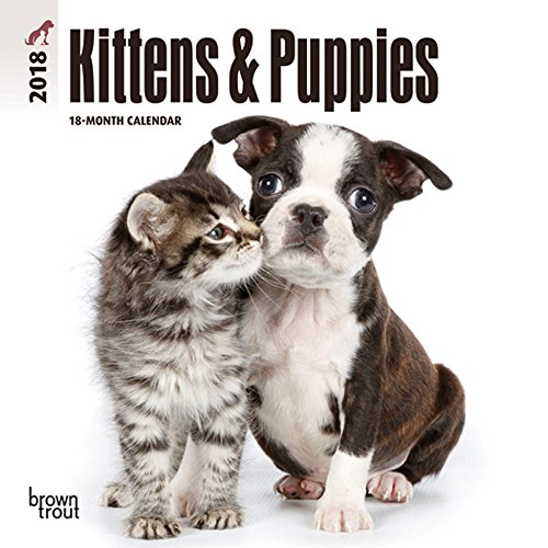 Kittens & Puppies 2018 7 x 7 Inch Monthly Mini Wall Calendar, Animals Cute Kittens (Multilingual Edition)
