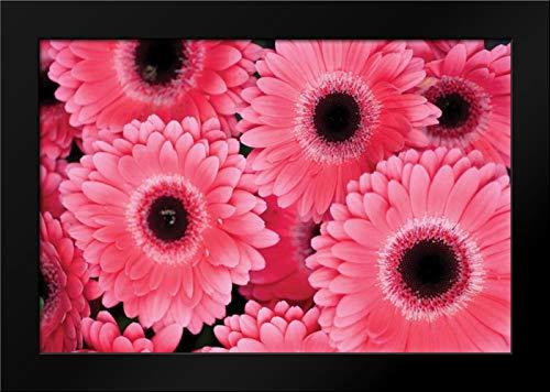 Pink Gerbera Daisies III Framed Art Print by Berzel, Erin