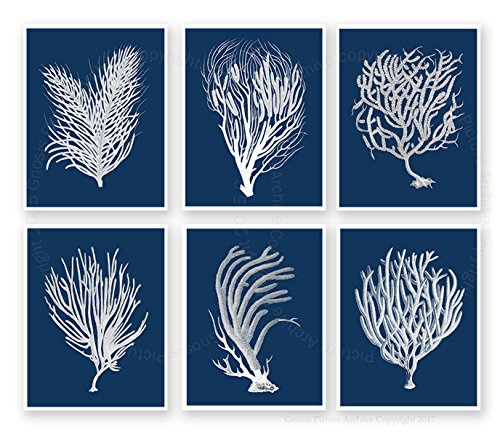 Navy Beach Decor Wall Art Sea Fan Sea Coral Set of 6 Unframed Art Prints by Gnosis Picture Archive Sea_corals_inverted_navy6C (Coral Picture)