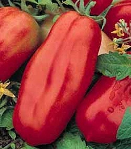 10 Seeds San Marzano Tomato - Huge Long Tomatoes!!! so Good!!! (Salsa Seeds Tomato)