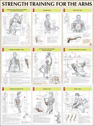 Strength Training Anatomy: Strength Training for the Arms Poster - Strength Training Anatomy Poster