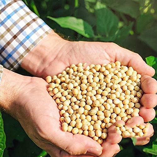 KINGDUO Egrow 20Pcs//Bag Semillas De Soja Verde Semillas De Soja Edamame Semillas De Soja Plantas De SOYA Bonsai