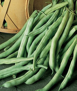Bean, Burpees Stringless Green Pod 1 Pkt. (1/2 lb.) ()