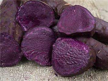 Okinawan Sweet Potato Seedsalso Known As Hawaiian Sweet Potato And Uala