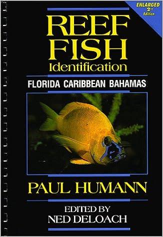 reef fish identification florida caribbean bahamas paul humann