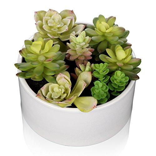 Ceramic Artificial Vases (MyGift 6 inch Realistic Artificial Faux Mixed Succulent Plants Arrangement w/ White Round Ceramic Vase)