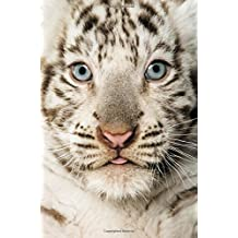 Baby Tiger Notebook: 100 Page Wide-lined Blank Notebook