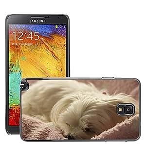 Print Motif Coque de protection Case Cover // M00125550 Perro Animal Pet maltesa blanca del // Samsung Galaxy Note 3 III N9000 N9002 N9005