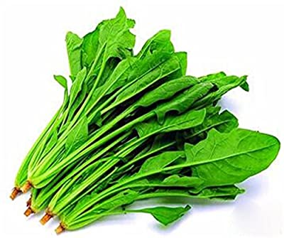 Spinach Chinese Variety 1000 Pcs Non-GMO Heirloom Vegetable Seeds