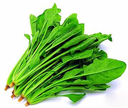 Spinach Chinese Variety 1000 Seeds NON-GMO Heirloom Vegetable