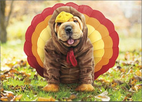 Turkey Dog Funny Shar Pei Thanksgiving Card