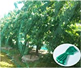 CandyHome Green Anti Bird Protection Net Mesh Garden Plant Netting Protect Seedlings Plants Flowers Fruit Trees Vegetables from Rodents Birds Deer Reusable Fencing (13Ft x 33Ft)