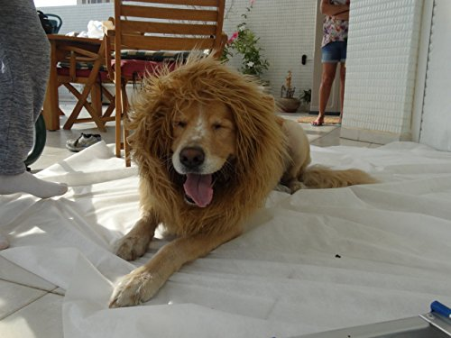 [MOOZA: Dog Outfits and Pet Costumes: Lion Costume For Dog - Funny Dog Costumes: Dog Lion Mane and Tail - Amazing Animal Costumes, Puppy Halloween Costumes - Make Every Dog A King! Bonus Tail] (Make Lion Costume For Dogs)