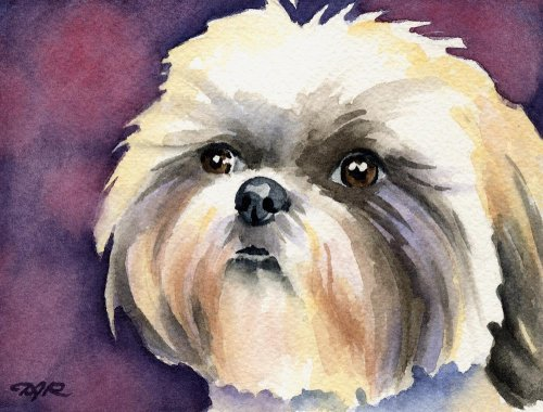 (Shih Tzu Dog Art Print by Artist DJ Rogers)