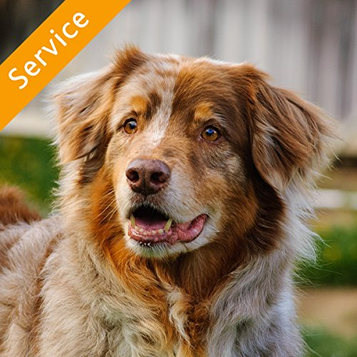 Electronic Pet Fence Installation - Up to 1000 Feet