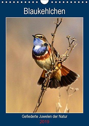 Blaukehlchen. Gefiederte Juwelen der Natur. (Wandkalender 2019 DIN A4 hoch): Einzigartige Blaukehlchen-Portraits. (Planer, 14 Seiten ) (CALVENDO Tiere)