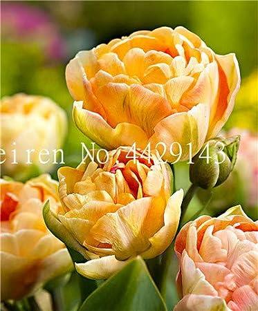 Bloom Green Co. 100 piezas de semillas de hortalizas Semillas de Okra Semillas de viagra naturales Plantas de Bonsai Semillas para el hogar y amp; jardín: 2