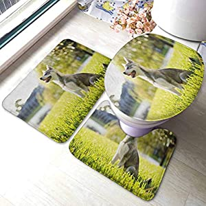 Alaskan Malamute Extra Soft Shower Bath Rugs Klee Kai Puppy Sitting on Grass Looking Up Friendly Young Cute Animal Mat and Toilet Lid Cover Multicolor 20