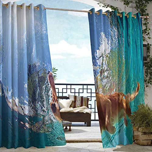 - DILITECK Home Patio Outdoor Curtain Funny Underwater Photo of Golden Labrador Retriever Puppy Swimming in Pool Happy Simple Stylish W72 xL96 Cinnamon Turquoise