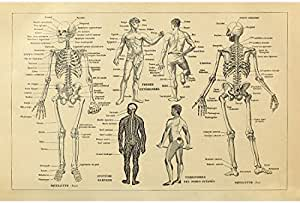 Details about  /C403P 1800/'s Medical Human Anatomy Poster Art Hot Gift