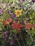 img - for Perrenials (Time Life Encyclopedia of Gardening, Perrennials) book / textbook / text book