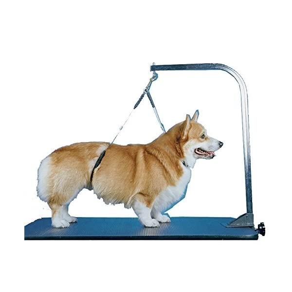 No-Sit Haunch Holder Dog Grooming Restraint Large Dogs Click on image for further info. 2