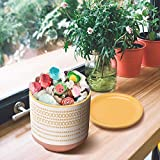 Flower Plant Pot Indoor, 5 Inch Ceramic Planter