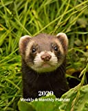 2020 Weekly and Monthly Planner: Ferret - Monthly Calendar with U.S./UK/ Canadian/Christian/Jewish/Muslim Holidays- Calendar in Review/Notes 8 x 10 in.-Wildlife Animal  Nature