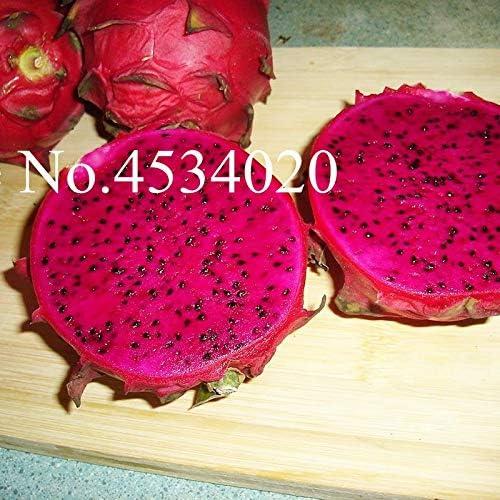 G/én/érique frais 100pcs graines de fruits Pitaya pour la plantation bleu ciel