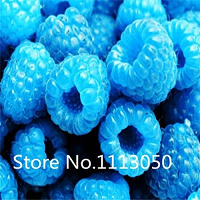 Sale! 100pcs 10 kinds Bonsai raspberry Seeds Organic Blooming Fruit Seeds Garden Plant