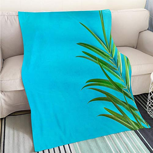 Super Soft Flannel Thicken Blanket Spiky Palm Tree Leaf on Painted Light Blue Wall Background Bright Morning Sunlight Leaks Hipster Funky Style Pastel Colors Sofa Bed or Bed 3D Printing Cool quilt