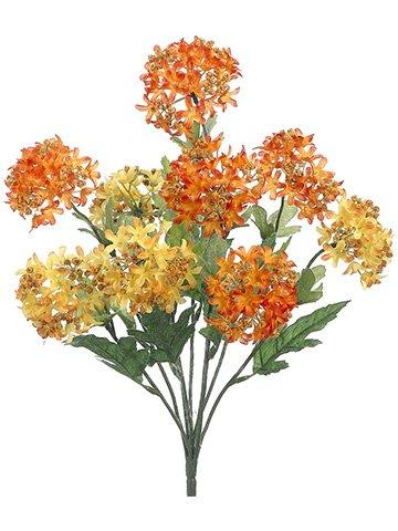 18-Snowball-Bush-x9-Orange-Yellow-pack-of-12