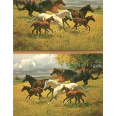Acorn Spring Ranch Horse Lovers Heavy Gift Wrapping Paper -30 in x30 ft Roll (Wrap Spring Gift)