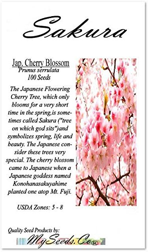 ANESE SAKURA FLOWERING CHERRY, Prunus serrulata Tree Seed - Japanese Cherry Blossom Tree Seeds - By MySeeds.Co (Big Pack - Japanese Sakura) ()