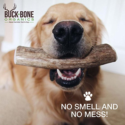 Elk-Antler-Dog-Chews-by-Buck-Bone-Organics-All-Natural-Healthy-Chew-For-Large-Dogs-From-Montana-Made-in-the-USA-LARGE